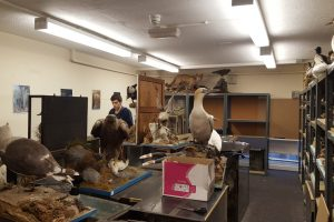 Curator's Blog – Rediscovering Our Collections